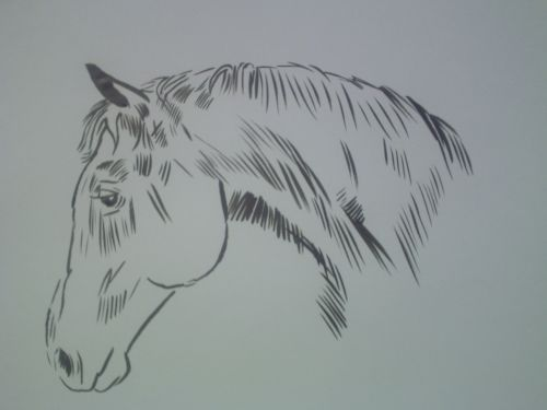 Drawing Simple Head Horse