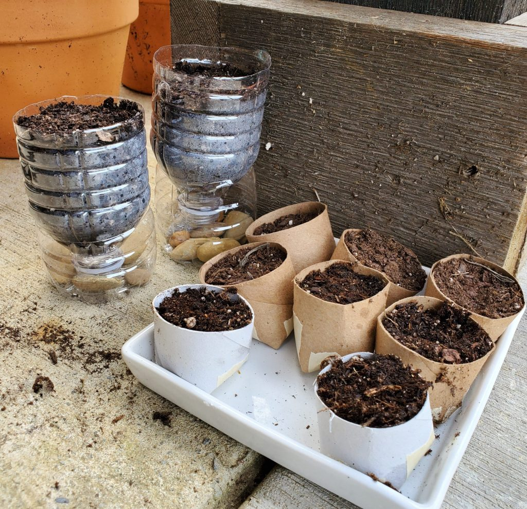 All our seed pots together.