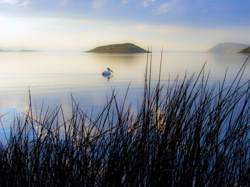 Pelican swims across Klamath lake during a soft sunset