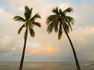 Palm Trees at Dawn