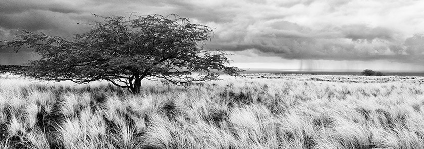 Passing storm over Hawaii created awesome views from the upper Waikoloa... converted to black and white