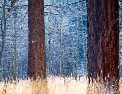 Tahoe Colors