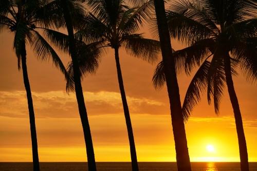 Tropical scene from the Big Island of Hawaii
