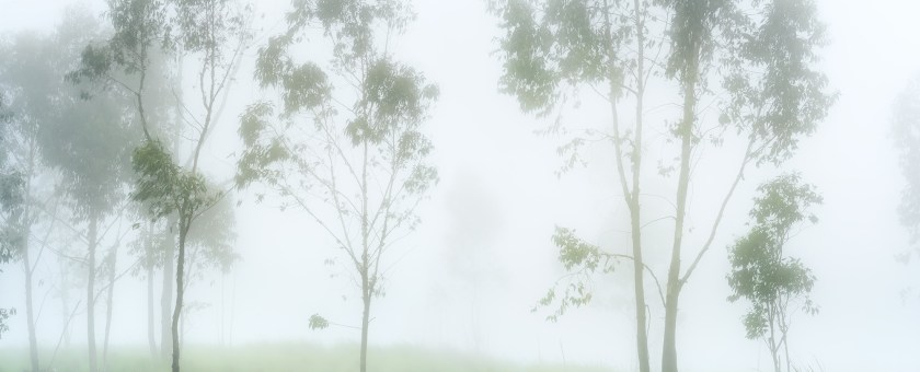 Trees are softly standing in a field covered in fog.