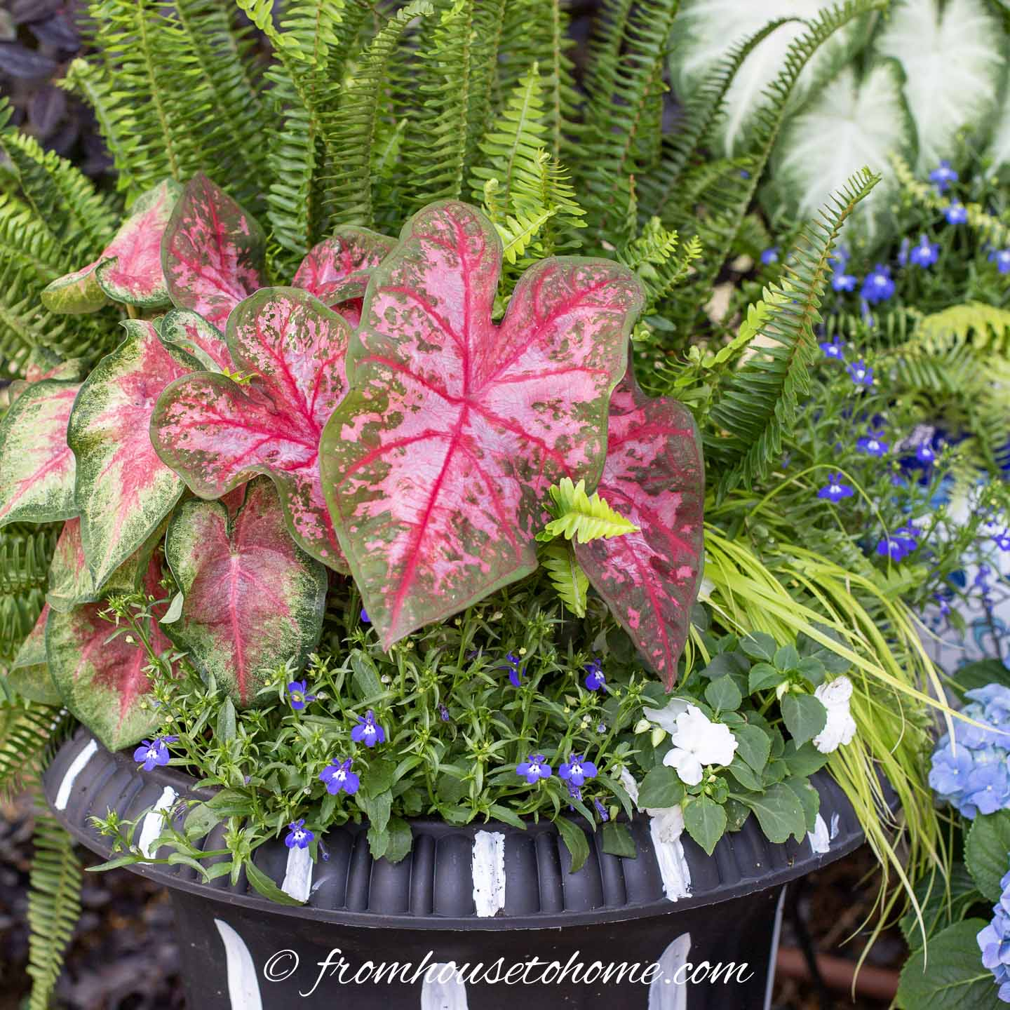 Patriotic Red White And Blue Flower Pot Combinations