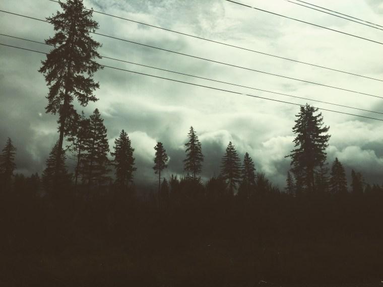 Sticks, fog and greenery for daysssss