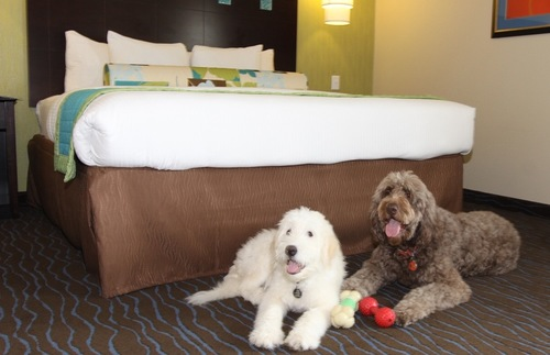 Which Are The Most Pet Friendly US Hotel Chains And