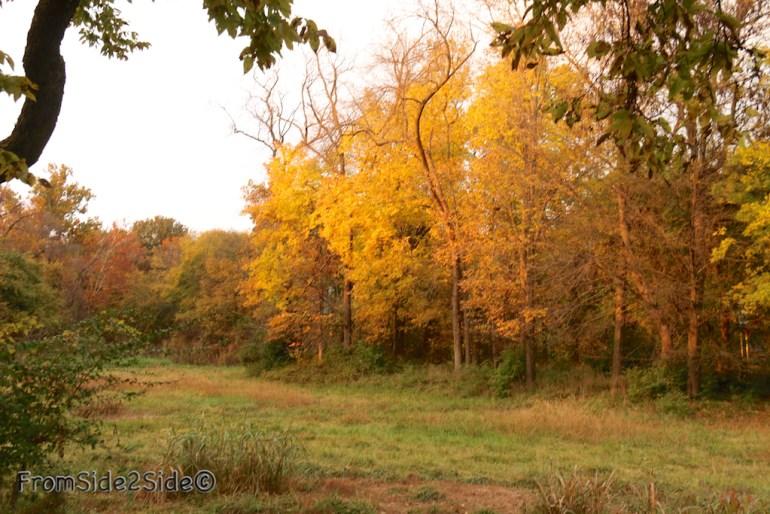 automne_2014 3 (1)
