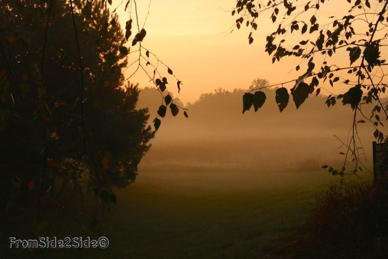 automne_2014 9 (1)