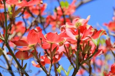 printemps 10 (1)