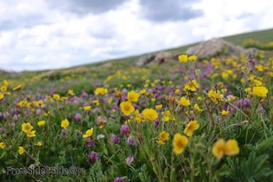 Rocky Mountains 9