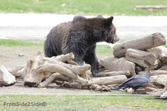 ours yellowstone 4