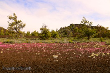craters of the moon 14