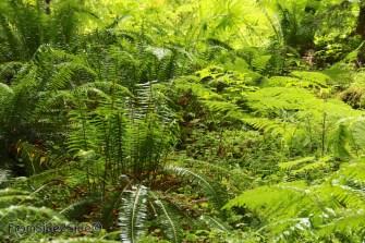 olympic-rainforest-14