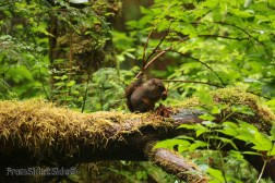 olympic-rainforest-17