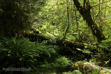 olympic-rainforest-2