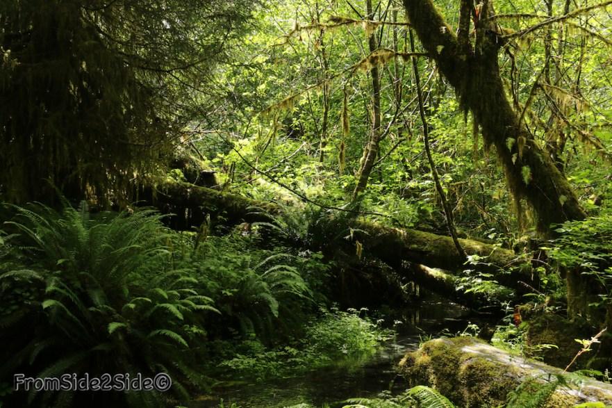 olympic-rainforest-2