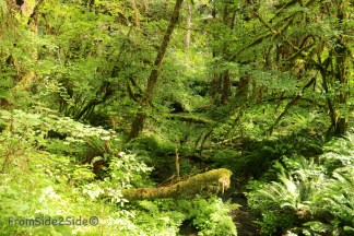 olympic-rainforest-3