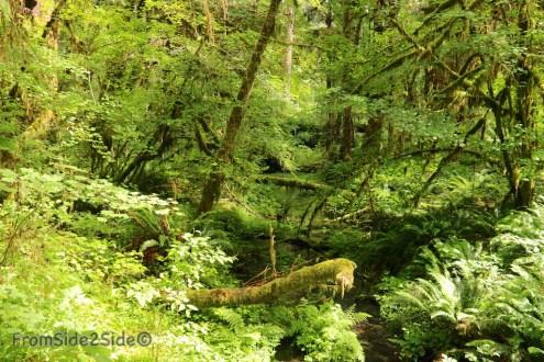 olympic-rainforest-3
