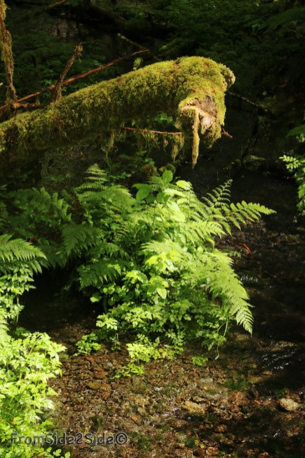 olympic-rainforest-4