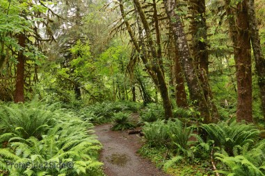 olympic-rainforest-5