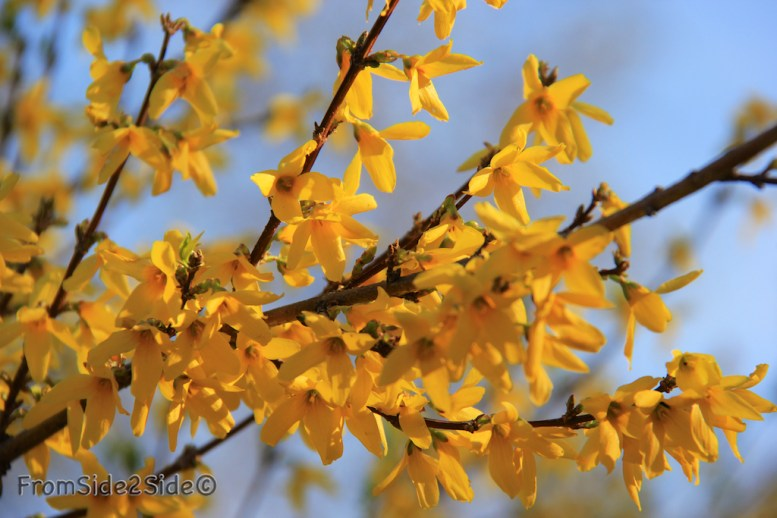 printemps 5 (1)