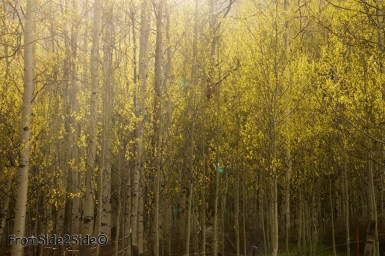 crested-butte-photo 4