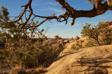 Canyonlands-Needles 59
