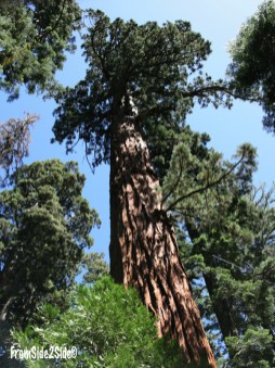 SequoiasYosemite