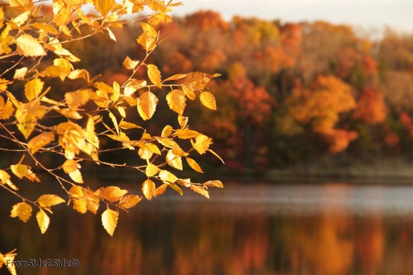 automne 10 (1)