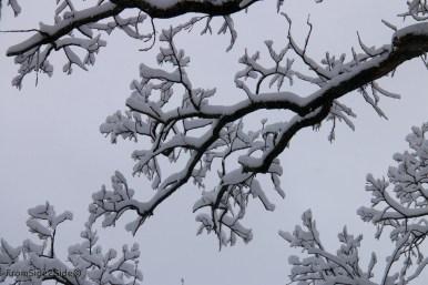 neige-jan-19 11