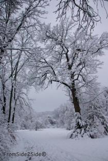 neige-jan-19 16