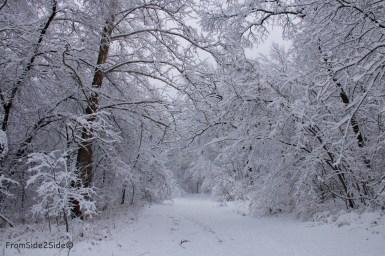 neige-jan-19 20