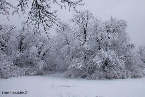neige-jan-19 23
