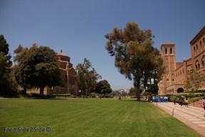 UCLA 8