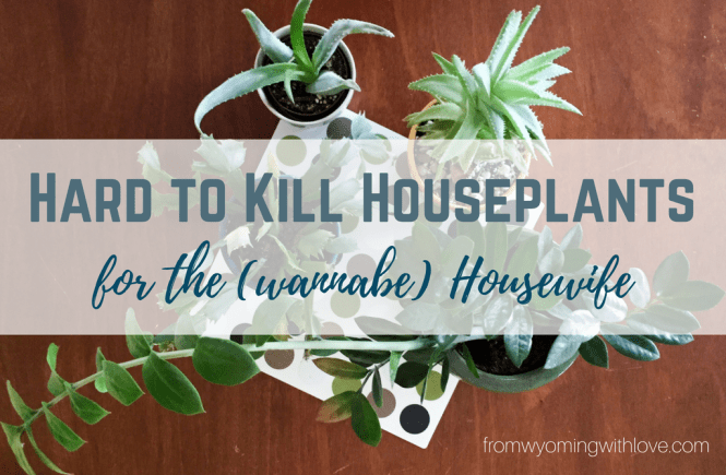 hard-to-kill-houseplants-for-the-wannabe-housewife