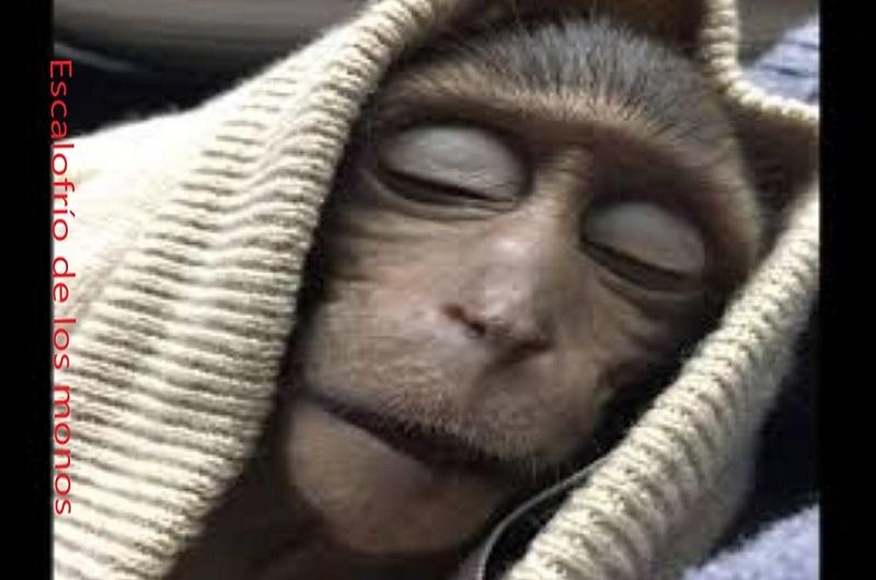 monos escalofrío