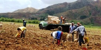 agricultores siembra combustible