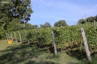 Vendemmia-2014-vigne-cantine-le-macchia-Castelfranco-Rieti-18