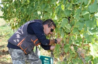 Vendemmia-2014-vigne-cantine-le-macchia-Castelfranco-Rieti-32