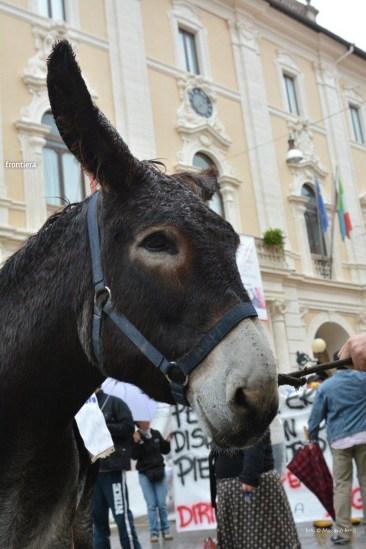 Protesta-Ippoterapia-10-ottobre-2015-foto-Massimo-Renzi-16