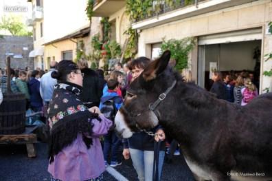 Vendemmia-nella-parrocchia-di-Santa-Lucia-foto-Massimo-Renzi-16
