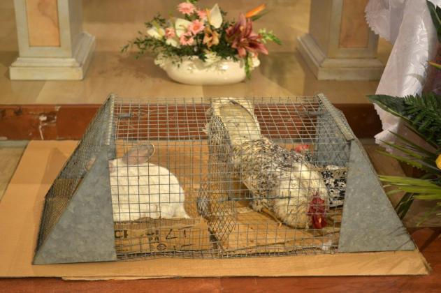 [17.01.2020] Benedizioni degli animali a San Michele Arcangelo DSC_4973