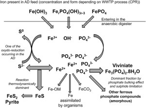 Frontiers | Significance of Vivianite Precipitation on the Mobility of Iron in Anaerobically