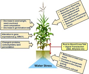 Frontiers | Cereal Crop Proteomics: Systemic Analysis of