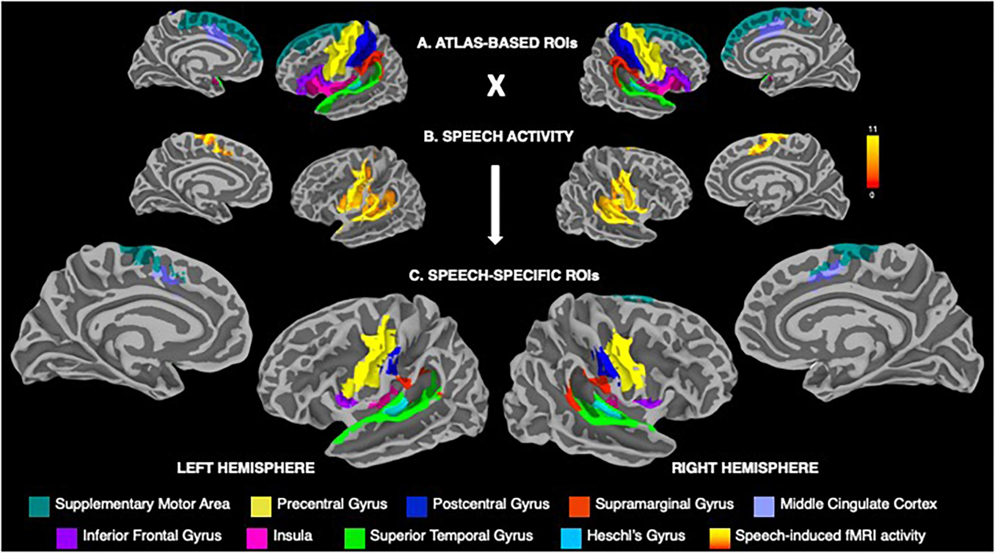 Frontiersual Dimorphism Within Brain Regions Controlling