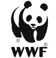 AMBIENTE. WWF ITALIA: DOMANI GIORNATA DEL LEOPARDO DELLE NEVI.