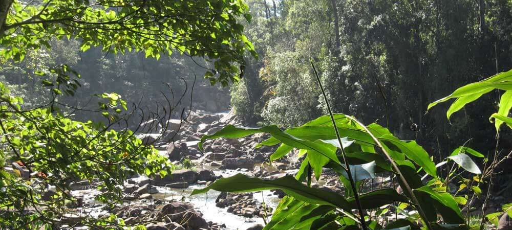 Sinharaja Forest Reserve, one of 8 UNESCO sites in Sri Lanka.
