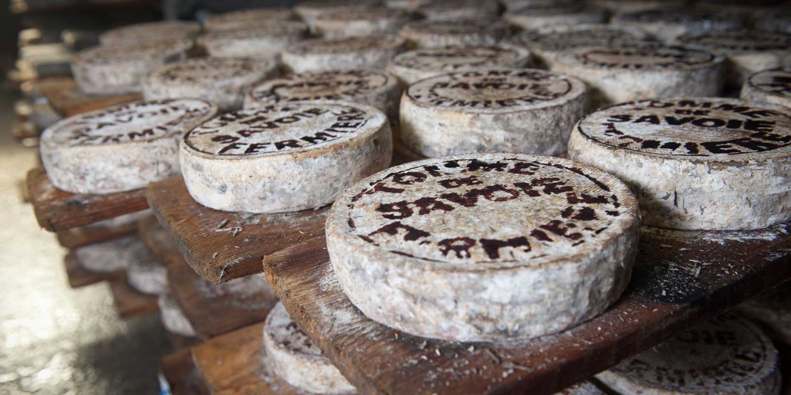 Close up of French cheese wheels.