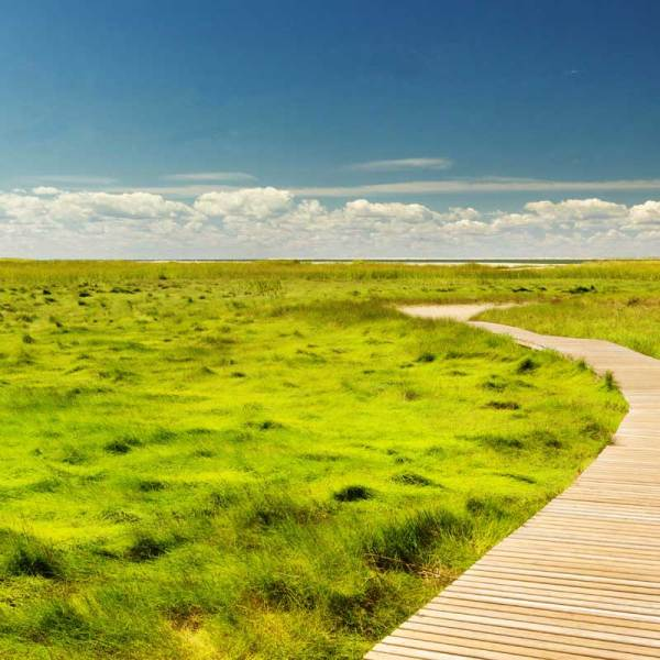 A wooden path cuts through sea grass